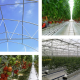 Multi-Tunnel Greenhouse Structure