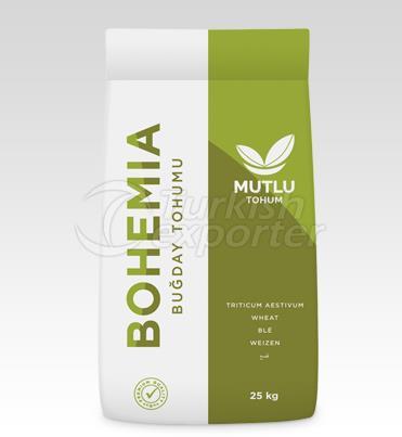 Wheat Seed - Bohemia