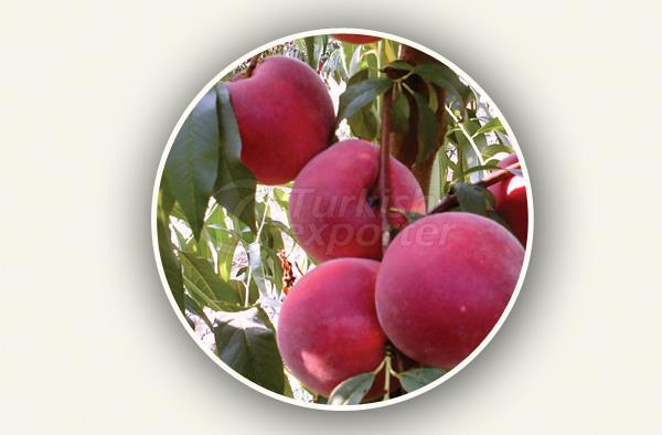 Peach Sapling