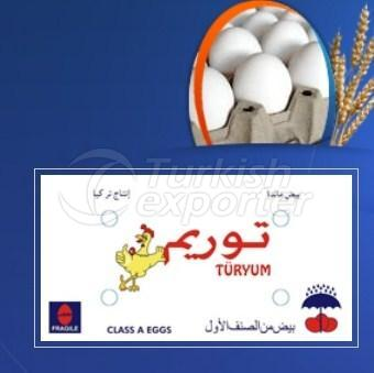 Egg Toryum